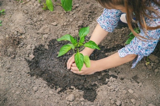 Child plants and watering plants in the garden.
