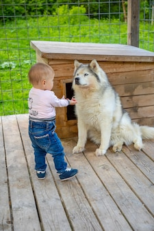 Ребенок играет с щенками хаски в финляндии в лапландии зимой