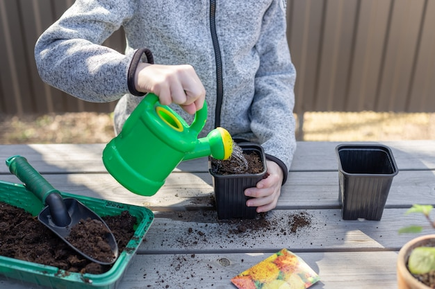 Child pours water from a watering can into a seedling pot with plant seeds child having fun with gardening in spring horizontal