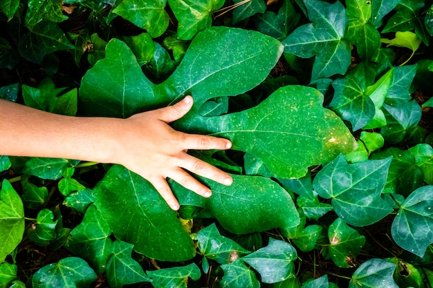 Child's hand on a big green leaf, with natural green leaves background, ecology concept.