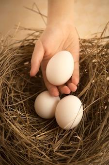 둥지에서 흰 계란을 따기 아이의 손