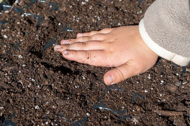 土に種を植える子供の手