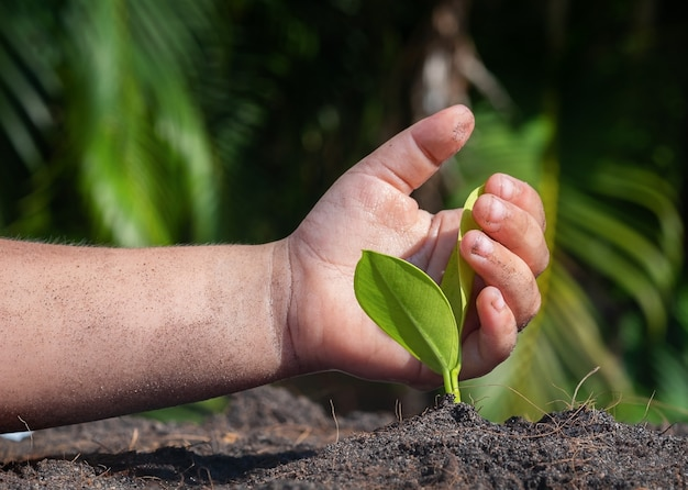 The child's hand protects the ficus sprout in the ground.