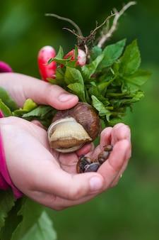 녹색 잎과 달팽이를 가진 아이의 손