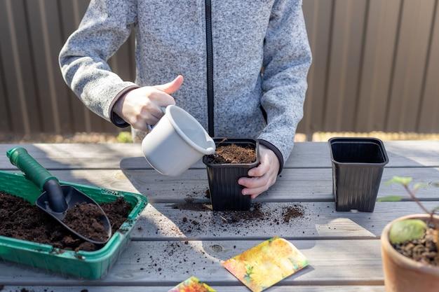 Ребенок, полив рассады горшок с семенами растений, стоя на деревянном столе. природа и забота.