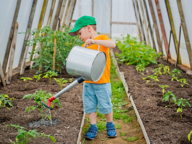 Child watering beds in the greenhouse watering can