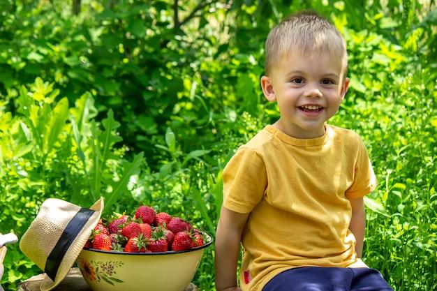 Ребенок с корзиной клубники. дети помогают с урожаем. природа. выборочный фокус.