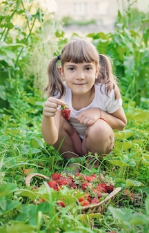 A child with strawberries in the hands