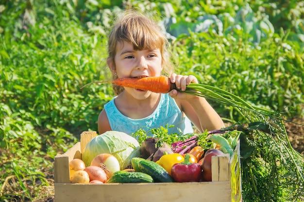 庭で野菜を持つ子供。