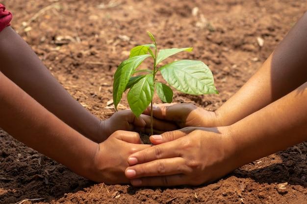 子供と大人が一緒に小さな木を植えました。大気汚染やpm2.5を削減し、地球温暖化を削減するためのコンセプトガーデン