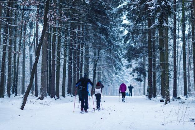 Дети и взрослые катаются на лыжах в лесу как зимние виды спорта