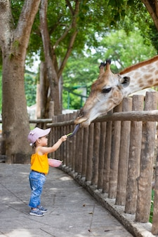 Children feed giraffes in the zoo.