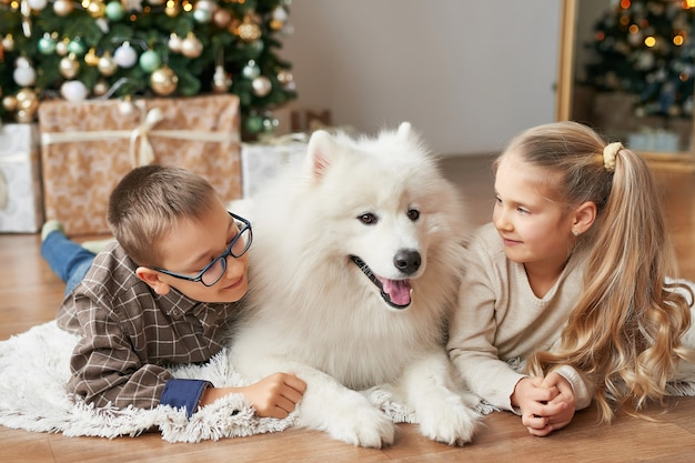 Children girl and boy with samoyed dog on christmas background