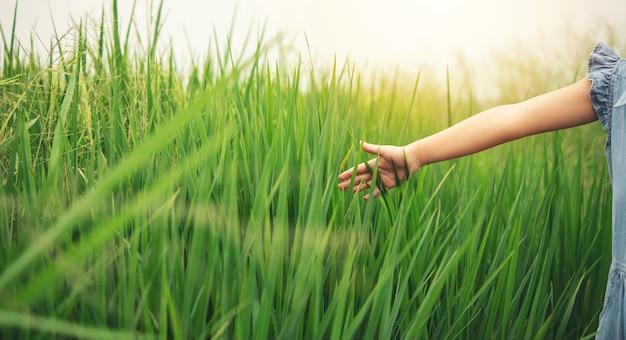 어린 소녀는 자신의 논에 쌀 원추형을 터치하고 확인합니다.
