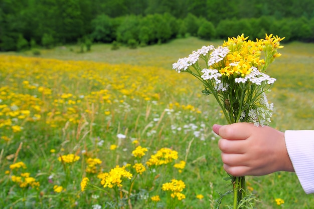 Children hand hold flowers in spring meadow