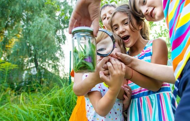 子供たちは自然の虫眼鏡を見ます。セレクティブフォーカス。自然。