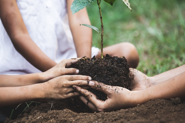 Children and parent hands planting young tree on black soil together