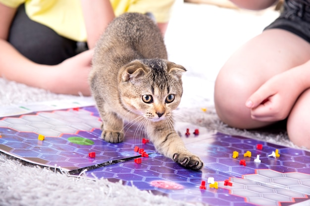 Children play with a british little playful kitten at home on the carpet.