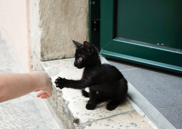 Children's hand and a black kitten on a doorstep