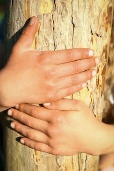 Детские руки держатся за пень в парке на природе