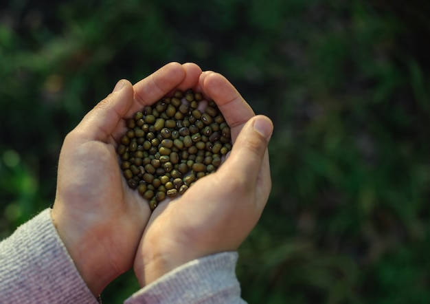 Детские руки держат семена.
