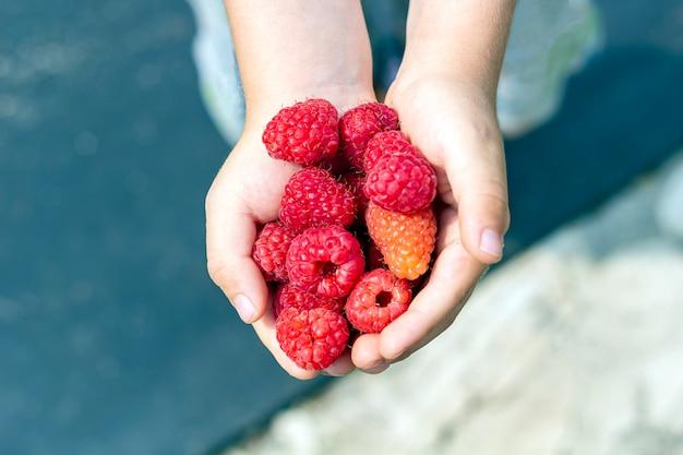 어린이의 손에는 소량의 나무 딸기가 야외에 있습니다. 건강한 식생활. 적절한 영양, 유기농 및 채식 음식의 개념.
