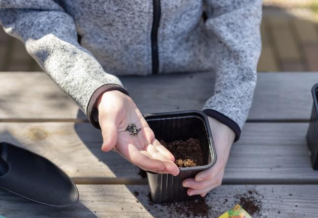 子供の手は、木製のテーブルの上に立って、苗のポットに植物の種を入れます。就学前の子供のための植物成長学習活動の概念。