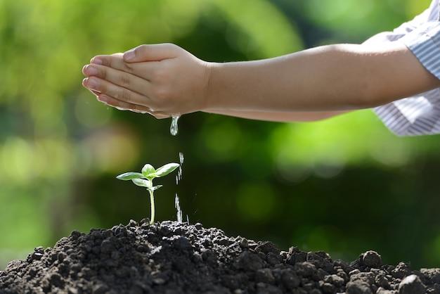 若い植物に水をまく子供の手