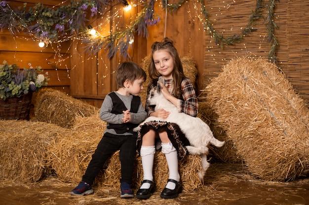 干し草の背景の農場の小屋でヤギを持つ子供