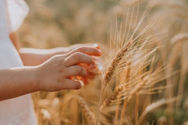 Детские руки на фоне пшеничного поля колосья пшеницы в руке фермера