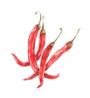 Перец чили острый красный ботанический рисунок