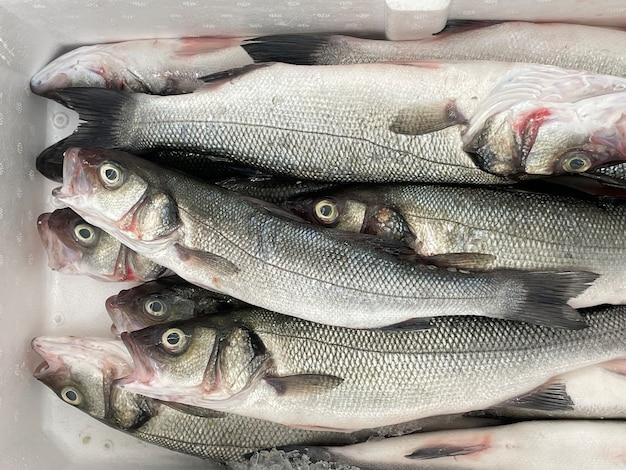 쇼케이스 근접 촬영 배경에 냉장된 생선
