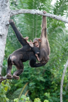 침팬지가 서로 놀아요