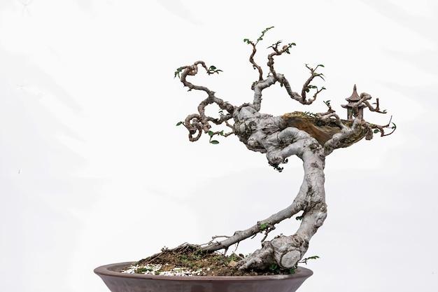 흰색 바탕에 중국 미술 분재