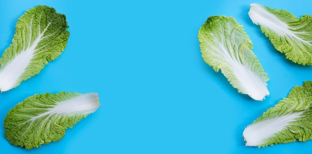 Chinese cabbage on blue surface