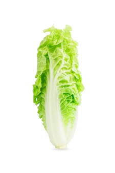 Chinese cabbage isolated on the white background.