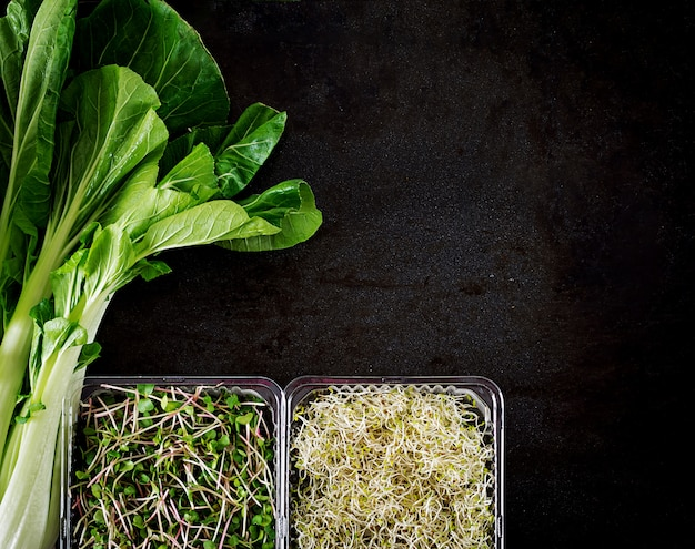 Chinese cabbage and micro greens on black table