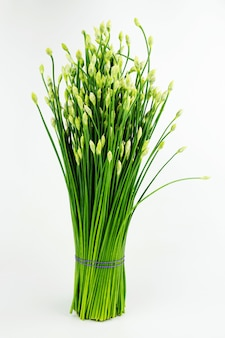 Chinese chive or chives flower isolated on white background