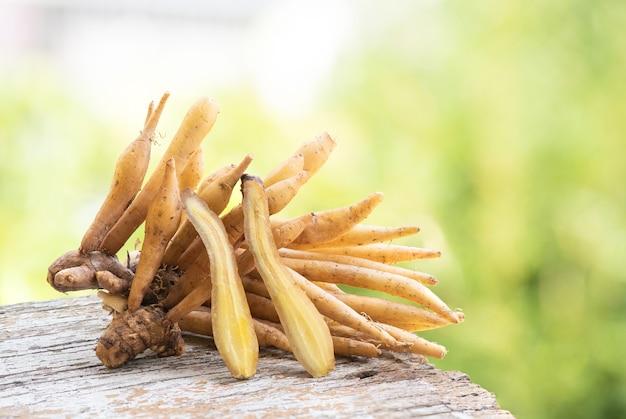 자연 배경에 중국 생강 또는 갈링게일 뿌리 줄기.