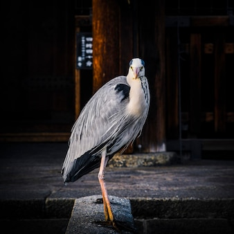 Chinese heron in a temple