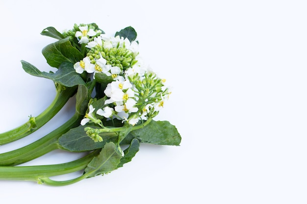 Chinese kale flower on white