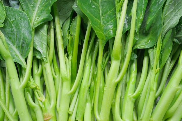 Chinese kale fresh vegetable green leaf