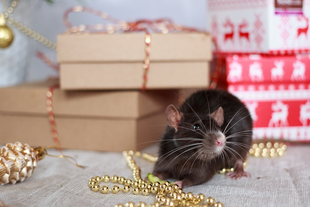 Chinese new year rat with festive decorations