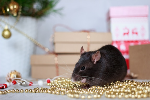 Chinese new year rat with festive decorations.