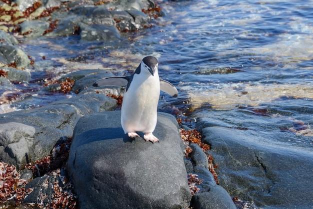 반사와 남극 대륙에서 해변에 턱 끈 펭귄