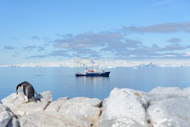 남극 대륙에서 해변에 턱 끈 펭귄