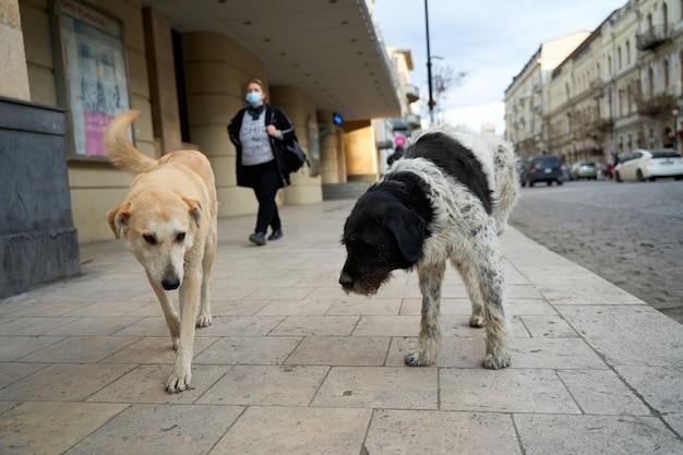 도시 거리에 부서진 길 잃은 개.