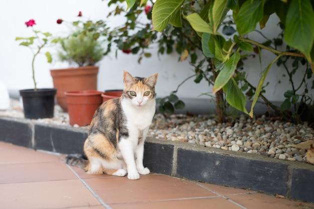 裏庭の三毛猫猫が自宅で夏の午後にカメラを見る