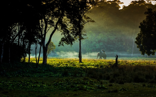 Слон живой природы животный на национальном парке chitwan, непале.