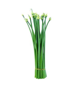Зеленый лук цветок или китайский лук, изолированные на белом фоне